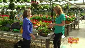 Celebrate Spring, and Mom, This Weekend! [Video]