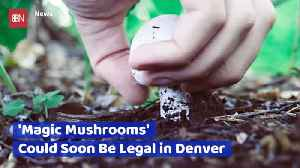 Will Magic Mushrooms Be Legal In Colorado [Video]