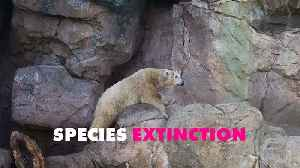 UN says a million species at risk of extinction... what now? [Video]