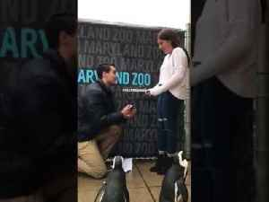Man Proposes to Girlfriend at Penguin Exhibit [Video]