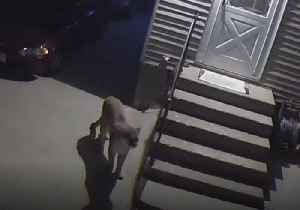 Police Warn Residents as Mountain Lion Sighted in Des Moines [Video]