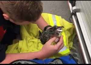 Firefighters Resuscitate Kitten Saved From Drain Pipe in New South Wales [Video]