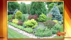 Beautify Your Landscape and Manage Water Where it Falls [Video]