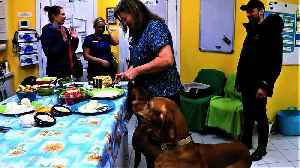 Veterinary clinic throws emotional goodbye party for three beloved dogs [Video]
