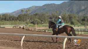 Goldstein Investigates: 36 Additional Horse Deaths Occurred At Santa Anita In 2018 [Video]