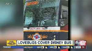 Love bugs cover Disney Cruise Line bus in Florida [Video]