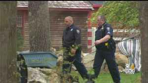 News video: Dogs Attack, Kill Teen Caring For Them In Dighton
