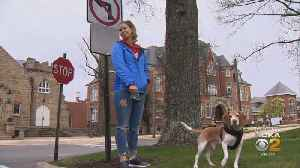 Pa. Universities Allowing Students To Bring Pets To Live In Campus Housing [Video]
