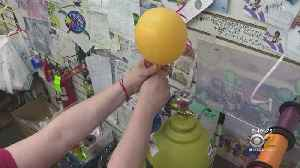 Helium Shortage Threatens To Inflate Prices For Party Balloons [Video]