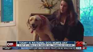 May 11 marks National Dog Mom's Day [Video]