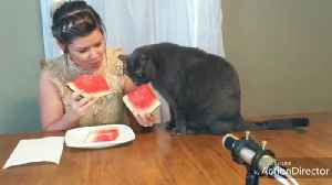 Cat shares juicy watermelon slice with owner [Video]