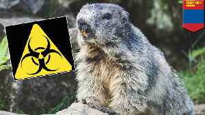 Bubonic plague strikes a couple in Mongolia after eating rodent meat [Video]