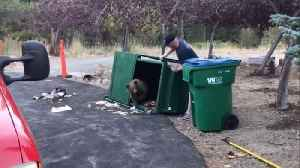 Three Bear Cubs Rescued From Being Trapped Inside Dumpster [Video]