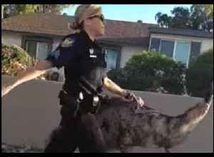 Police in Phoenix Have 'Emu-sing' Time Luring Bird Back Home [Video]