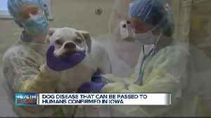 Ask Dr. Nandi: Iowa has confirmed multiple cases of a disease that can be transmitted from dogs to humans