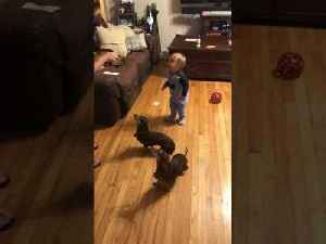 Baby Plops on Floor After Hearing Mom Order Their Dogs to Sit [Video]
