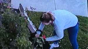 Thief Caught on Camera Stealing Roses Outside of California Business [Video]