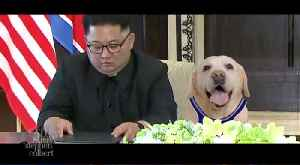 Air Bud's North Korea Sequel [Video]