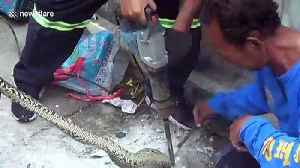 Python rescued after getting stuck in drain hole while fleeing stray dogs [Video]