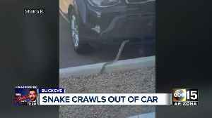 Snake crawls out of Valley woman's car [Video]