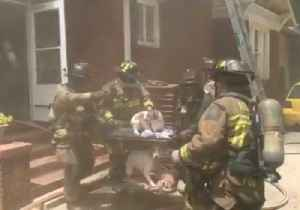 Atlanta Firefighters Rescue Dogs From Burning Home [Video]