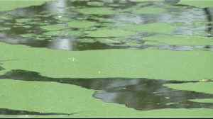 Algae on minds of Martin County leaders, residents as wet season approaches [Video]