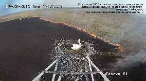 Time lapse captures stork's nest overlooking massive fire [Video]