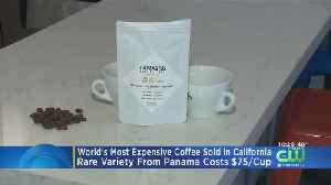 World's Most Expensive Coffee Costs $75 Per Cup [Video]