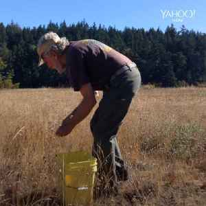 Man is a master seed harvester [Video]