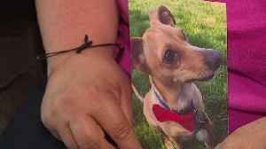 Heartbroken Woman Says Her Dog Was Stomped to Death by Family Member [Video]