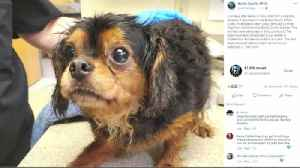 VIDEO More than 20 small dogs removed from 'filthy conditions' at breeder's home [Video]