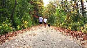 If You Walk Fast, You Are Likely To Live Longer, Study Finds [Video]