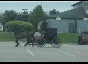 Goose Pesters Amish Man's Horse in Home Depot Parking Lot [Video]