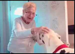 Great Dane Glad to Visit Owner's Grandma for Mother's Day [Video]