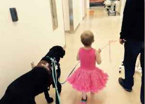 A Therapy Dog is Providing Comfort to Children at Randall Childrens Hospital [Video]