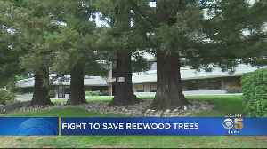 Menlo Park City Council Votes On Redwood Tree Removal [Video]