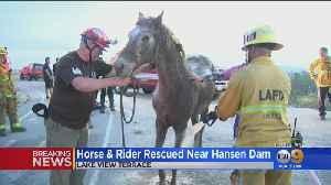 Firefighters Rescue Horse Stuck In Deep Mud Near Lake View Terrace [Video]