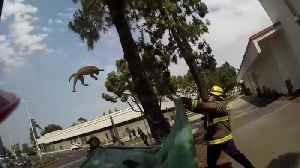 Fire fighters save cat stuck up extremely high tree [Video]
