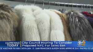 Hearing Today On Proposed Fur Ban [Video]