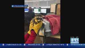 Baby Raccoon Rescued In Stockton [Video]