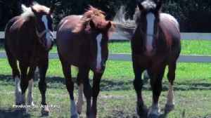 Horse Owner Gets No Jail Time For Over 30 Counts of Animal Cruelty [Video]