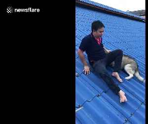 Dog owner rescues clumsy husky who got stuck on roof [Video]
