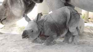 Historic Rhino Birth At Miami Zoo [Video]