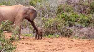 You'll See The Back Of My Trunk! Bad-tempered Elephant Hits Baby With Massive Trunk Before Mum Intervenes [Video]