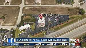 Live roaches found at Cape Coral Dairy Queen [Video]