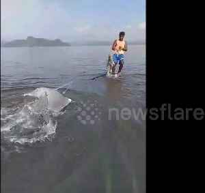 Indonesian residents rescue stranded dolphin stuck in fishnet [Video]