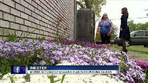 'It makes me feel victimized and targeted. Because why me?' Blossom bandit steals plants from woman's home [Video]