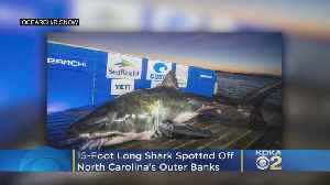 15-Foot Shark 'Luna' Spotted Off North Carolina's Outer Banks [Video]