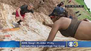 2019 Tough Mudder Philly Introducing Competitions For Dogs [Video]