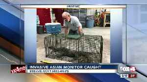Rare lizard caught by FWC officers [Video]